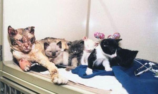 Кошка, котята,котенок, кошка спасла котят