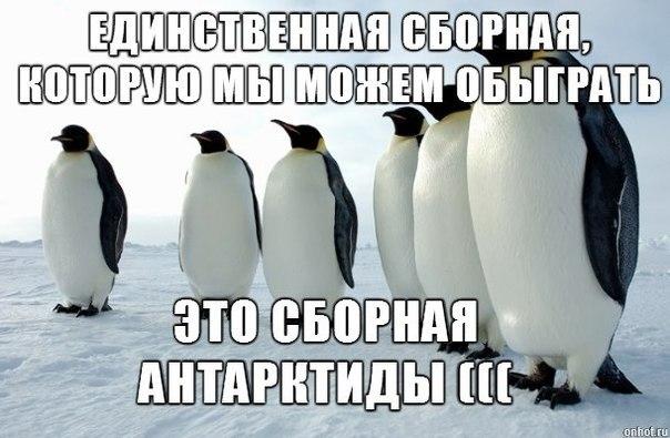 Сборная России и Алжил 1-1. Сбрная России поехала домой