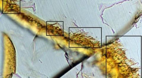 В метеорите с Марса нашли жизнь