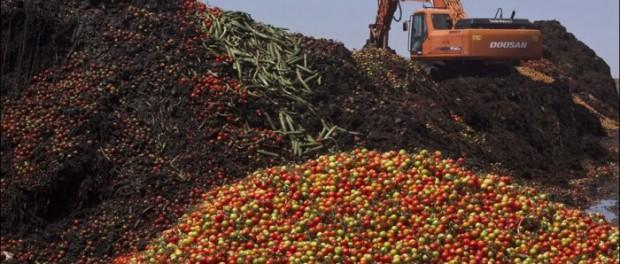 Латышские крестьяне начали уничтожать овощи