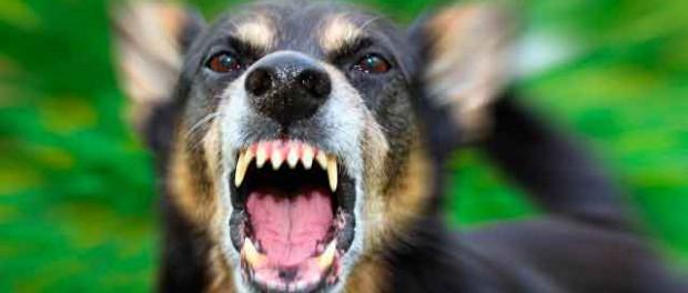Как распознать и противостоять агрессии у собак?