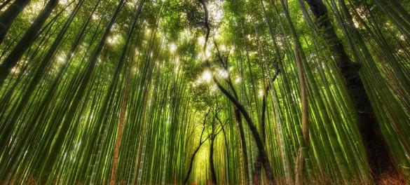 Сагано-бамбуковый лес