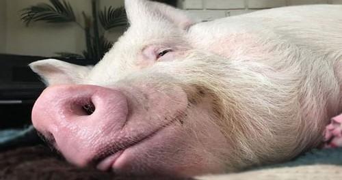 Россия ударила по румынским свиньям