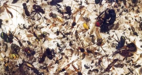 Конец света близок: количество насекомых уменьшилось на 80%