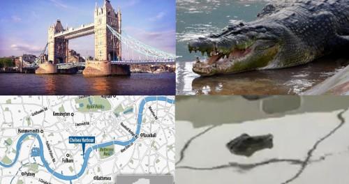 Из-за крокодила в Темзе Лондона начала настоящая паника