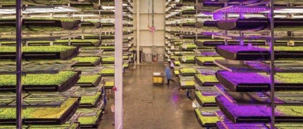 IKEA, Дэвид Чанг и Дубай инвестируют 40 миллионов в необычную ферму
