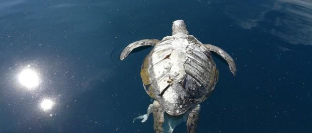 Сотни морских черепах найдены мертвыми возле Сальвадора