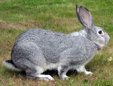 Кролики дохнут без видимых причин