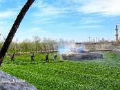 Восточный Гута фермы Айн-Тарм