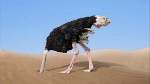 Страус голова в песке