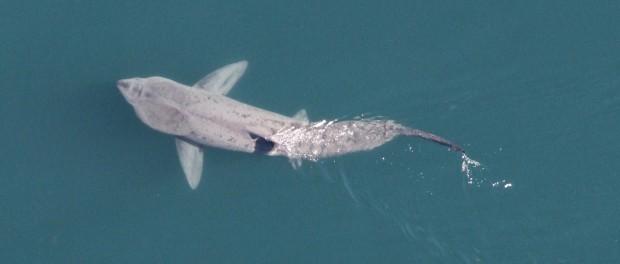 Нашествие акул возле Нью-Йорка — конец США