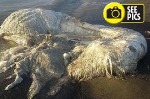 огромное существо выбросило на берег