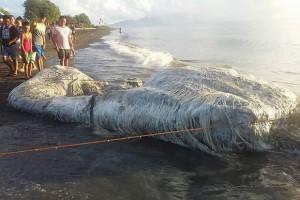 Морское гигантское чудовище