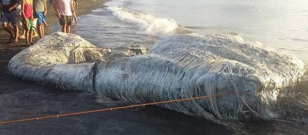 """Морское чудовище выброшенное на берег, пахнет, как """"нечто с другой планеты"""""""