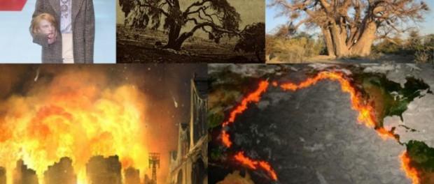 Умершие древние деревья приближают нас к Апокалипсису