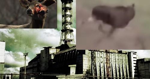 Мутант напугал студентов в Чернобыле 18+