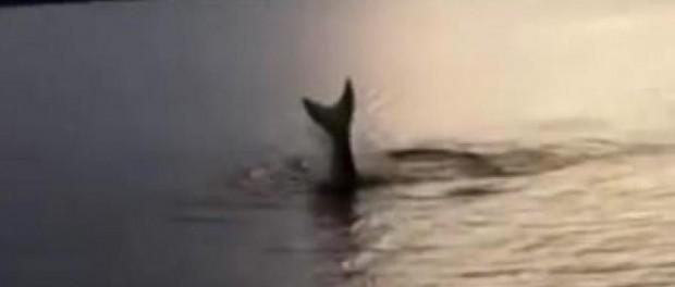 Видео доказывающее существование русалок