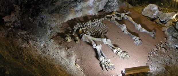Во время раскопок недалеко от Сочи обнаружили останки древнего кубаноида