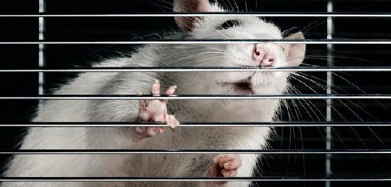 Мы все мелкие крысы в большой денежной афере