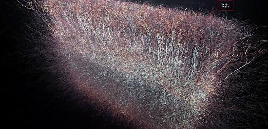 На мозг имеет 11 измерений в Вселенной