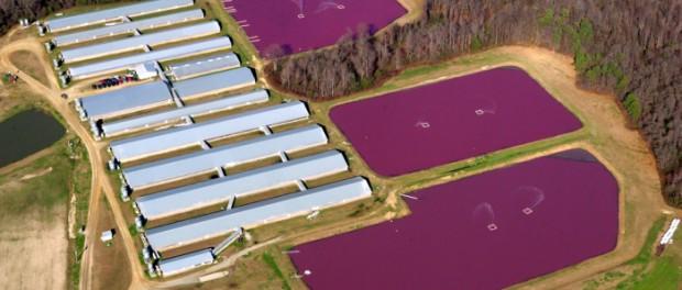 После урагана «Флоренс» Северная Каролина утопает в фекалиях
