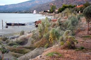 много паутины в Греции