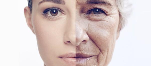Физетин замедляет старение организма в десятки раз