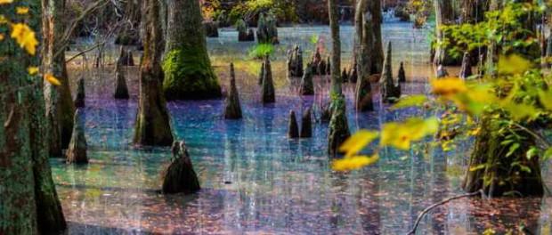 В болоте Вирджинии увидели свет Нибиру
