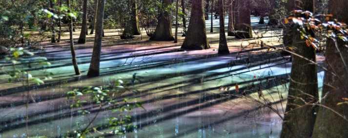 цвет радуги в болоте Видржинии