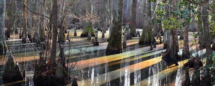 Цвет радуги прямо в болоте