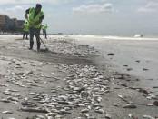 Панама погибшая рыба