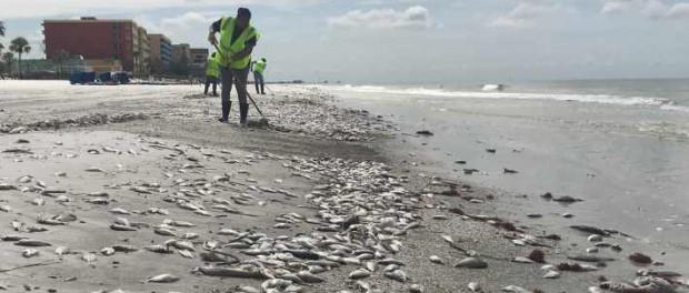От чего так много рыбы передохло в Панаме