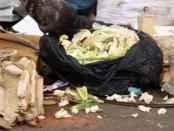мусорная реформа на мусор