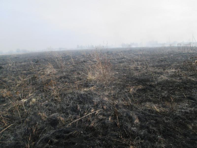 Житомирская область пожары