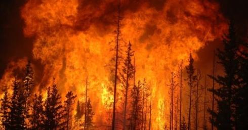 Пожары в Чили: кто поджог всю страну