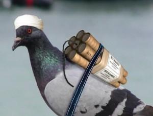 Пакистан Индия миг-21 птица
