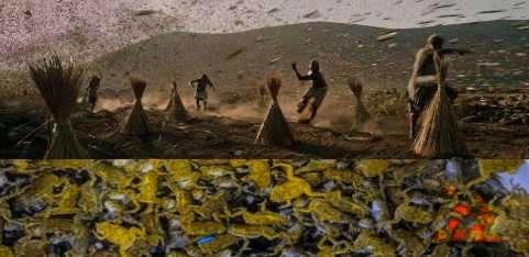 Конец Света: тысячи ядовитых лягушек во Флориде