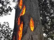 сезон пожаров начинается