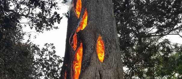 Орбитальные поджигатели лесов взялись за старое