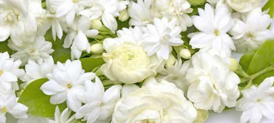 Цветочная композиция с тюльпаном — мета или реальность?