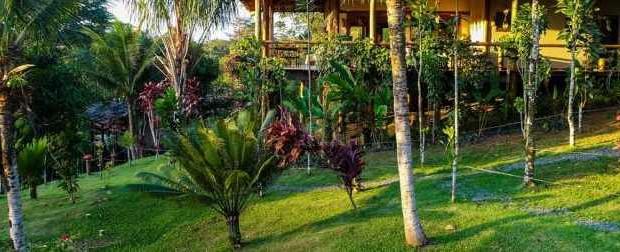 Духовном винограднике Аяуаска в Бразилии