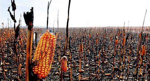 В мире наступает глобальный голод