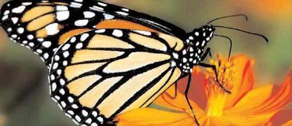 Масса насекомых на планете уменьшилась на 76%