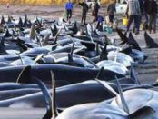 киты выбрасываются на берег