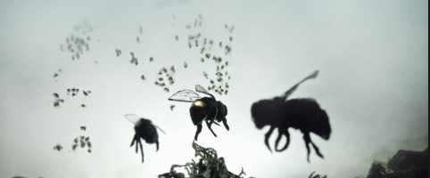 В Калифорнии начали массово гибнут пчелы