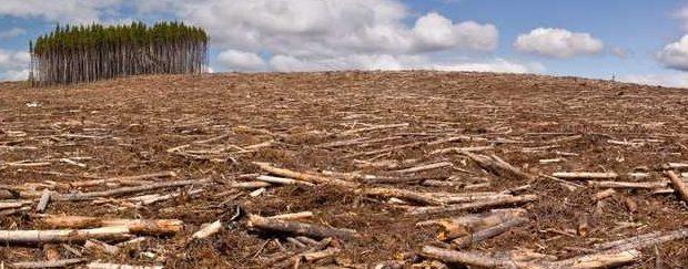 В Бурятии посадили депутата за вырубку леса