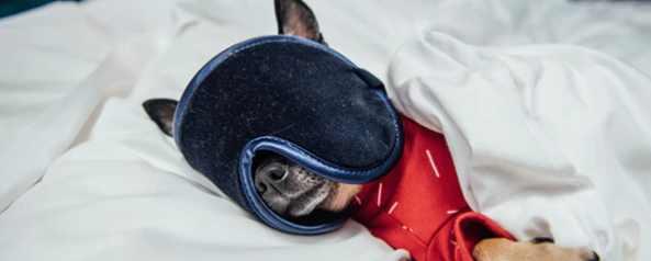 В каком отеле можно отдохнуть с собакой