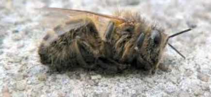 В Свердловской области погибло 80% пчел