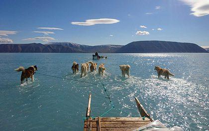Льда в Гренландии стало за год на 60% меньше