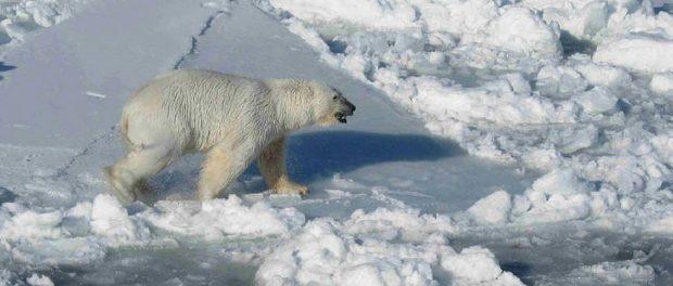 В Арктике тепмература поднялась до 35 градусов